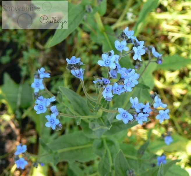 forgetmenot watermark