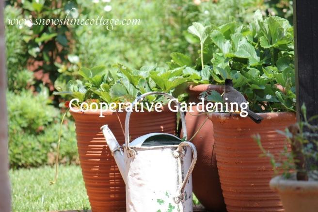 garden-2650534_1280-2